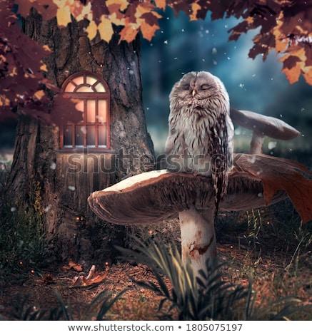 Fantázia világ illusztráció lány természet tájkép Stock fotó © colematt