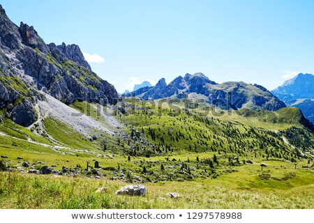 Giau Pass green forest at daylight Stock photo © frimufilms