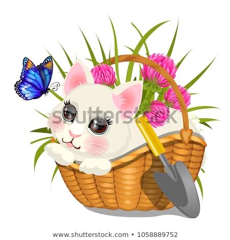 Bonitinho esboço cartaz fofo gatinho sessão Foto stock © Lady-Luck
