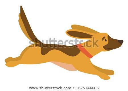 Cão corrida outono parque cãozinho vetor Foto stock © robuart