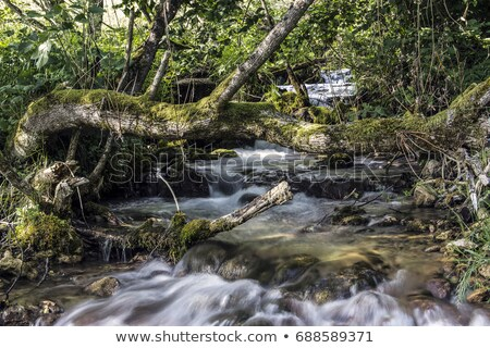 Sopotnica waterfalls in Serbia Stock photo © boggy