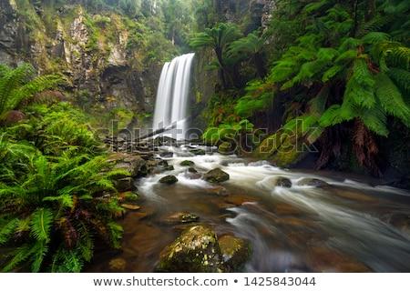Waterval hout landschap bomen schoonheid rivier Stockfoto © kwest