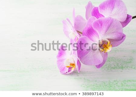 rózsaszín · virágzó · orchidea · gyönyörű · üvegház · virág - stock fotó © tannjuska