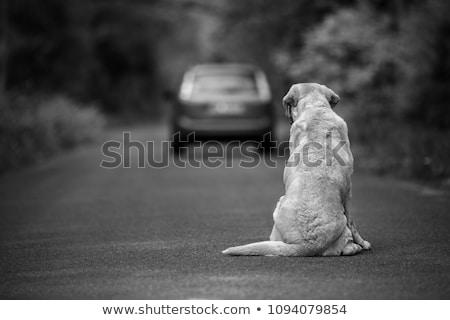 Abandoned dog Stock photo © AlessandroZocc