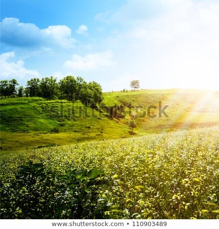 Fényes nyár délután természetes hátterek fa Stock fotó © tolokonov