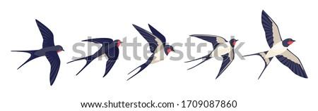 Swallows Stock photo © adrenalina