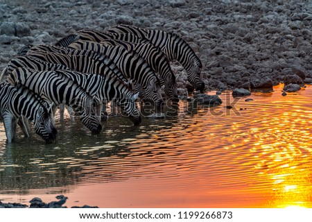 Safari parc Namibie coucher du soleil nature paysage Photo stock © imagex