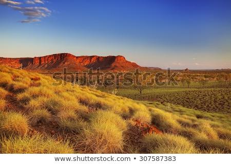 オーストラリア人 風景 日の出 ガム ストックフォト © THP