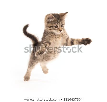 Foto stock: Blanco · gatito · azul · feliz · ojos · animales