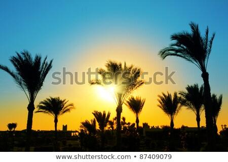 sun setting lights palm tree stock photo © backyardproductions