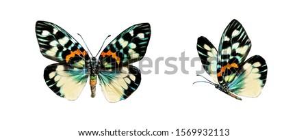 Moth closeup white background Stock photo © bluering