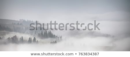 Buğu soğuk sonbahar sabah ıslak açık havada Stok fotoğraf © leedsn
