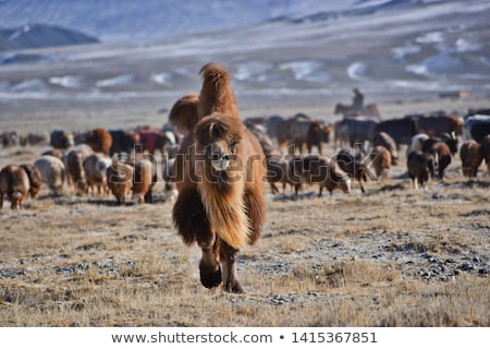 Kudde schapen bergen mooie berg zomer Stockfoto © olira