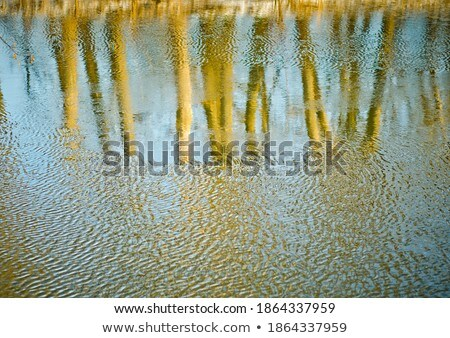 Abstract rippled reflection of trees in lake water Stock photo © Balefire9