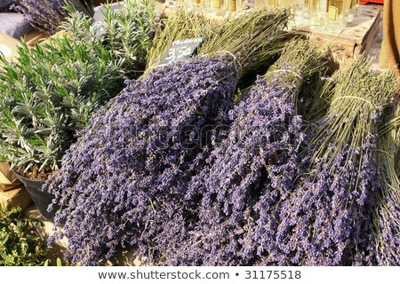 Lavender in a pot on the farmers' market Stock photo © frank11