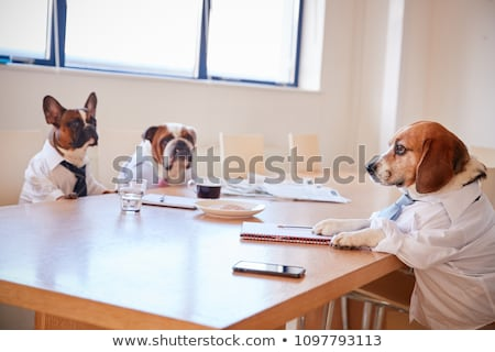 hond · zakenman · portefeuille · laarzen - stockfoto © karelin721