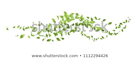 Design element with green spring leaves Stock photo © shawlinmohd