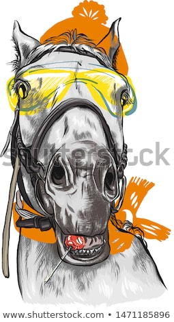 portrait of horse with orange horse gear stock photo © meinzahn