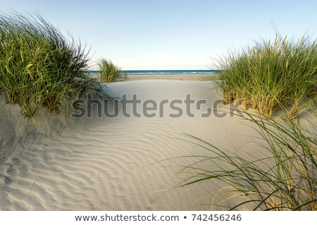 Calm beach with dunes and green grass in sunset Stock photo © meinzahn