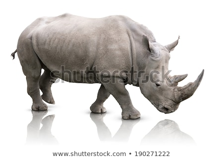 Rhino isolated on white Stock photo © BrandonSeidel