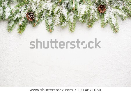 Spruce snow gray wood background Stock photo © romvo