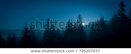 Night sky forest scene Stock photo © bluering