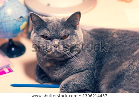 Terrible muzzle of a black cat with red eyes Stock photo © vlad_star