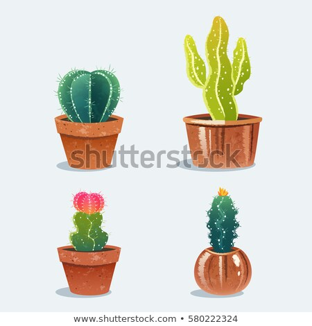 Cuatro cactus plantas fondo arte cabeza Foto stock © colematt