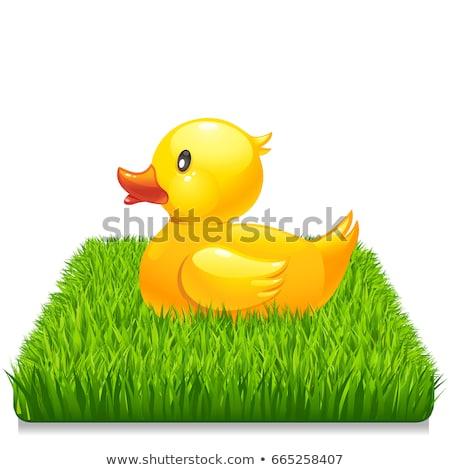 yeşil · kauçuk · ördek · örnek · beyaz · turuncu - stok fotoğraf © sonia_ai