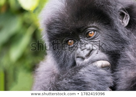 Gorilla erdő fölött fa fű narancs Stock fotó © colematt