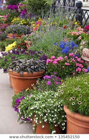 Jardin fleurs pot extérieur céramique table Photo stock © amok