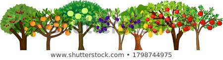 elma · ağacı · vektör · dizayn · meyve · ahşap · elma - stok fotoğraf © robuart