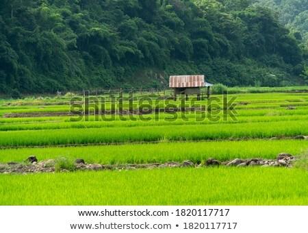 Chata rolnik rano przeciwmgielne pola drzewo Zdjęcia stock © meinzahn