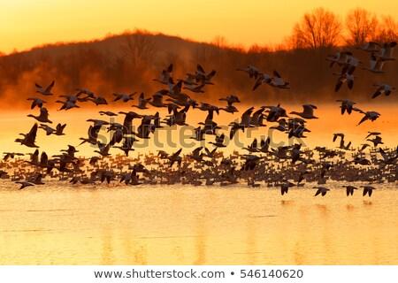 鳥 狩猟 実例 郡 平和 無料 ストックフォト © adrenalina