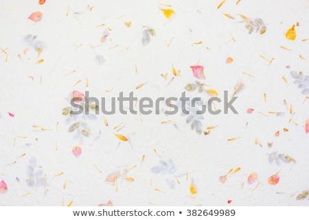 古い · 花 · 紙 · テクスチャ · 図書 · 葉 - ストックフォト © ilolab