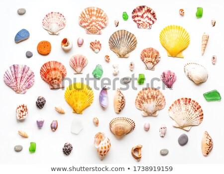 Coral & Sea Glass Stock photo © Undy