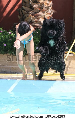 child and newfoundland dog in swimming pool Stock photo © cynoclub