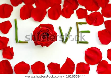Spell it out flower Stock photo © bluering