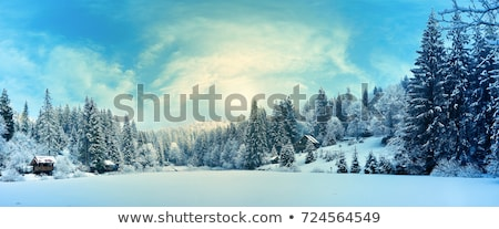 tél · erdő · hóesés · reggel · fű · fa - stock fotó © kotenko