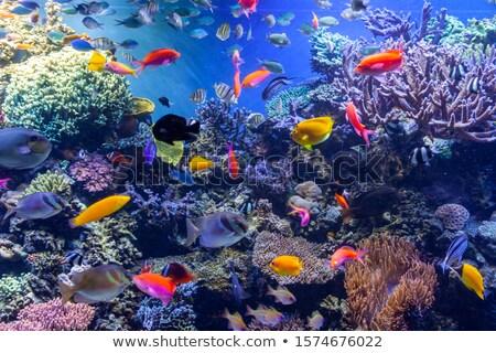 Aquarium poissons tropicaux lumière du soleil poissons océan Photo stock © vapi