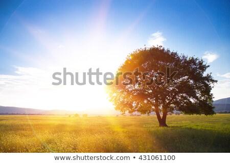 solitário · árvore · cerca · aldeia · manhã · paisagem - foto stock © kotenko