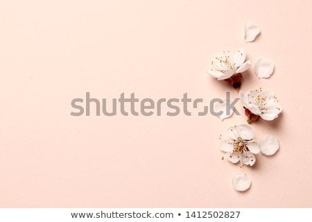 Floral tarjeta de felicitación flor aumentó marco blanco Foto stock © Terriana
