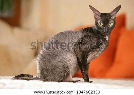 Kedi kedi yavrusu ayakta bakıyor düz objektif Stok fotoğraf © CatchyImages