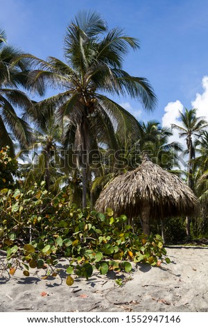 Sunshade on the tropical beach at Tayrona, Colombia Stock photo © boggy