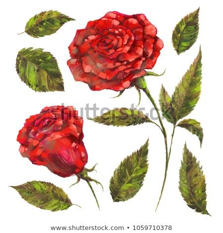 Green Roses watercolor medium Stock photo © shawlinmohd