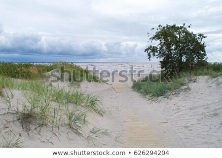 Homokos tengerpart Észtország kilátás nyár tengerpart természet Stock fotó © borisb17