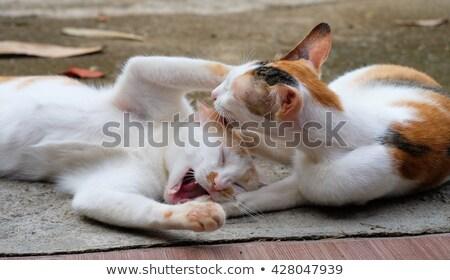 2 猫 再生 一緒に 演奏 スタンド ストックフォト © Ansonstock