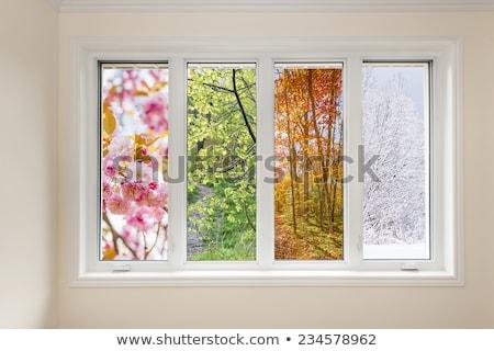 Four rural windows Stock photo © pzaxe