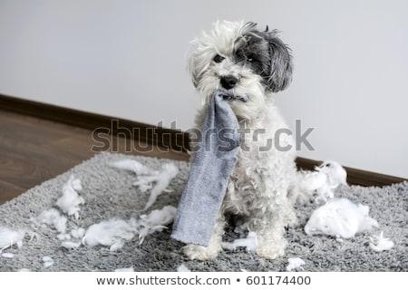 Psa ofiara Fotografia za klatki Zdjęcia stock © Novic