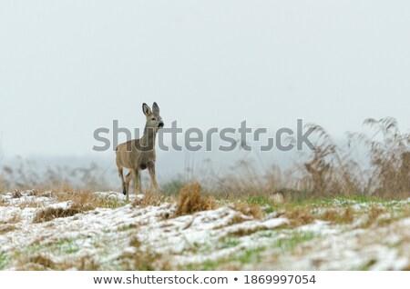 冬 · 午前 · 黄色 · 日の出 · フィールド · 森林 - ストックフォト © michey